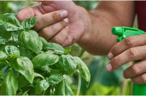 Your garden pests battle – won!